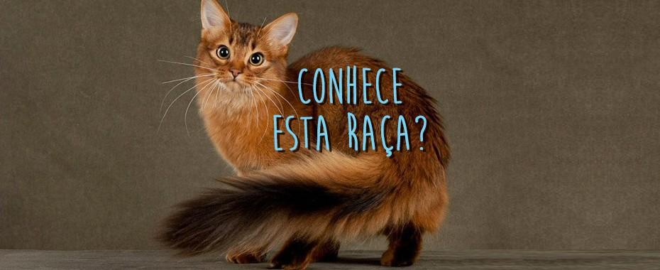 Http Cattime Com Cat Names Cat Names By Color  Black White Tuxedo Cat Names